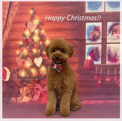 Happy Christmas!_a0392423_00160985.jpg