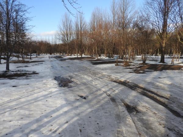 今週末の天気と気温(2020年1月9日)雪解け進む、場内一部ツルツル・どろどろです_b0174425_19223136.jpg