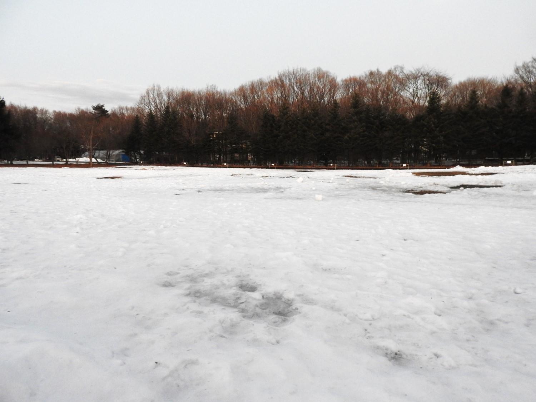 今週末の天気と気温(2020年1月9日)雪解け進む、場内一部ツルツル・どろどろです_b0174425_19273181.jpg
