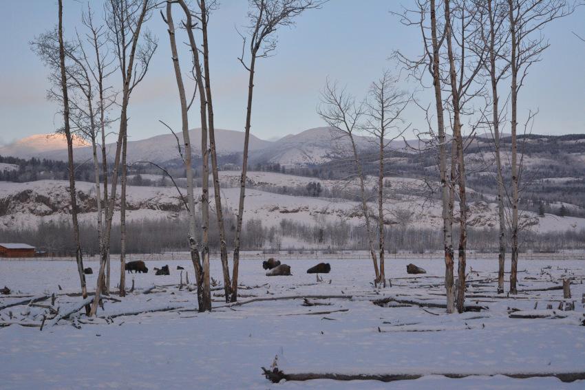 なかなか寒かった ミート・ザ・ワイルド マイナス30度_d0112928_00541132.jpg