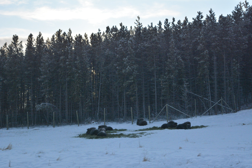なかなか寒かった ミート・ザ・ワイルド マイナス30度_d0112928_00554455.jpg