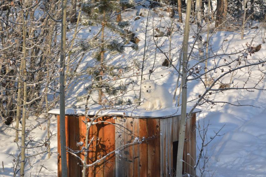 なかなか寒かった ミート・ザ・ワイルド マイナス30度_d0112928_01014355.jpg