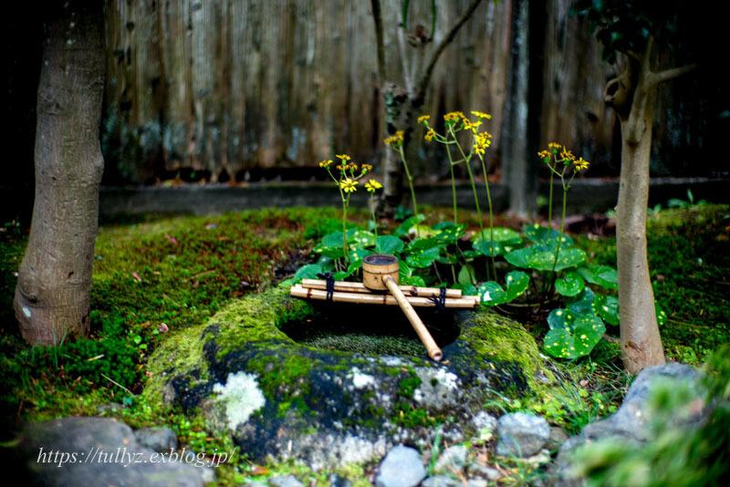 京都の秋2019(31)_d0108132_14561844.jpg