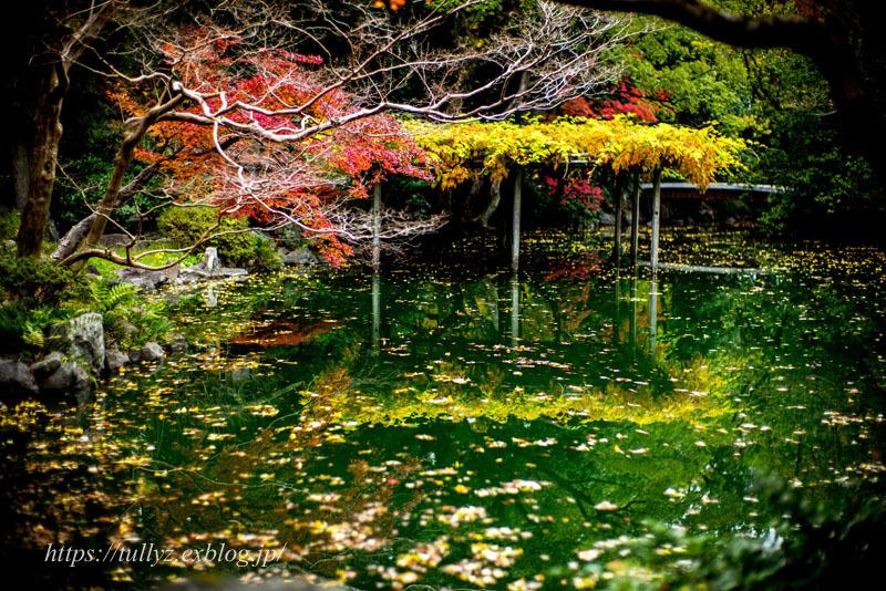 京都の秋2019(33)_d0108132_14593239.jpg