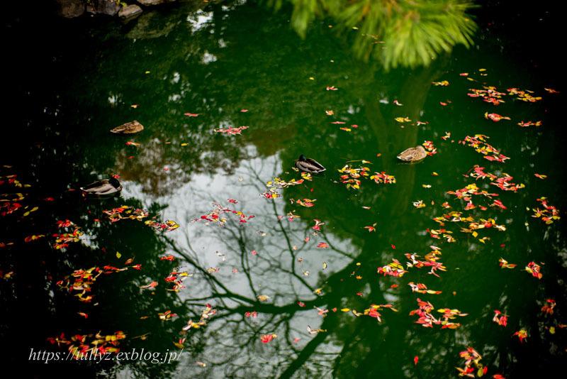 京都の秋2019(34)_d0108132_15015299.jpg