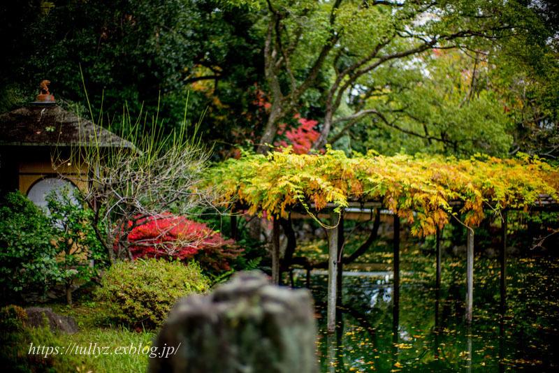 京都の秋2019(35)_d0108132_15053777.jpg