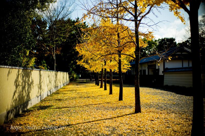 京都の秋2019(38)_d0108132_15313060.jpg