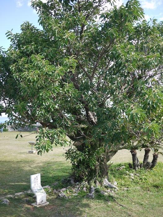 沖縄冬至越えの旅8 世界遺産 勝連城跡へ_e0359436_10413236.jpeg