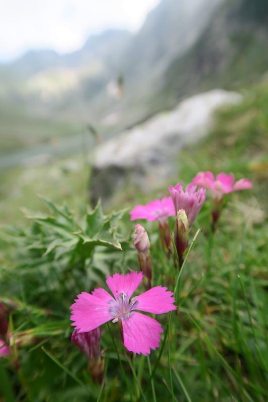 アルプスの山が呼んでる、実写映画『ハイジ』とマリッティメ・アルプス_f0234936_849380.jpg
