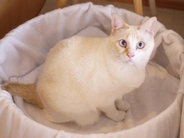 猫のお留守番 ニーナちゃん編。_a0143140_20544852.jpg