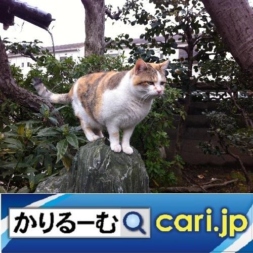 全国に広がる、コラボ店! cari.jp_a0392441_11112623.jpg