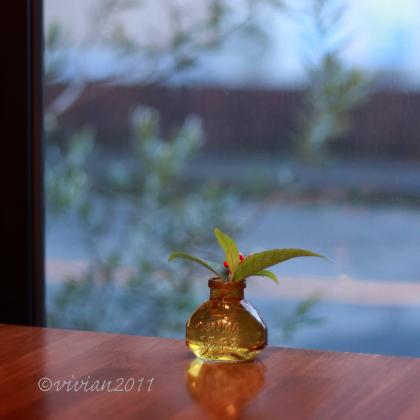 自家焙煎珈琲 かめとかめ ~2020年のカフェはじめ~_e0227942_22114494.jpg
