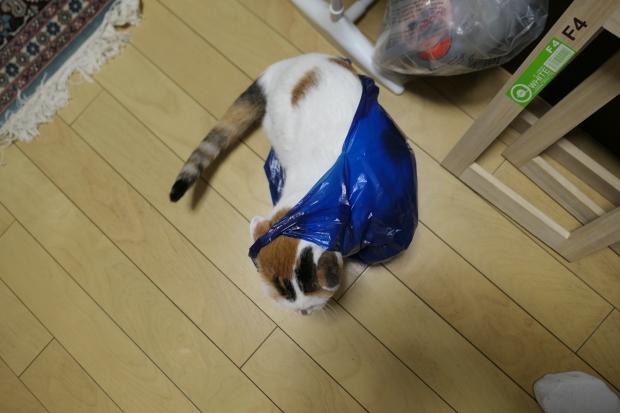 都会の雪、、猫は袋が好き。_d0193569_07050910.jpg