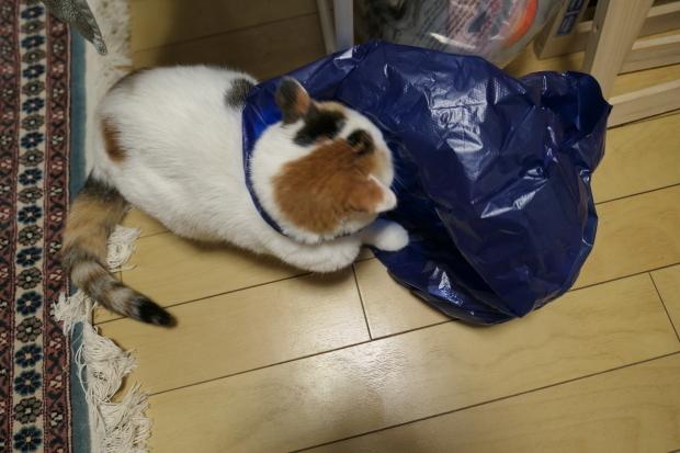 都会の雪、、猫は袋が好き。_d0193569_07051392.jpg