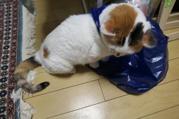 都会の雪、、猫は袋が好き。_d0193569_07051714.jpg