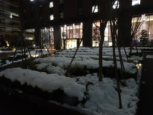 都会の雪、、猫は袋が好き。_d0193569_07052321.jpg