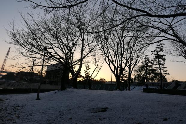 都会の雪、、猫は袋が好き。_d0193569_07052938.jpg