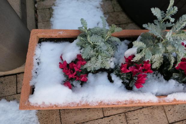 都会の雪、、猫は袋が好き。_d0193569_07053323.jpg