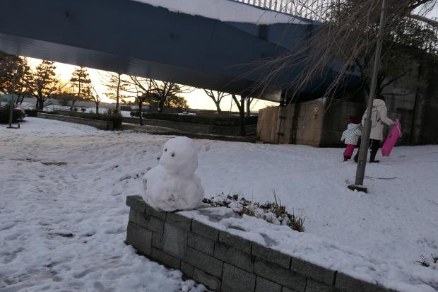 都会の雪、、猫は袋が好き。_d0193569_07055119.jpg