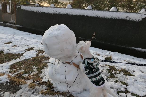 都会の雪、、猫は袋が好き。_d0193569_07055666.jpg