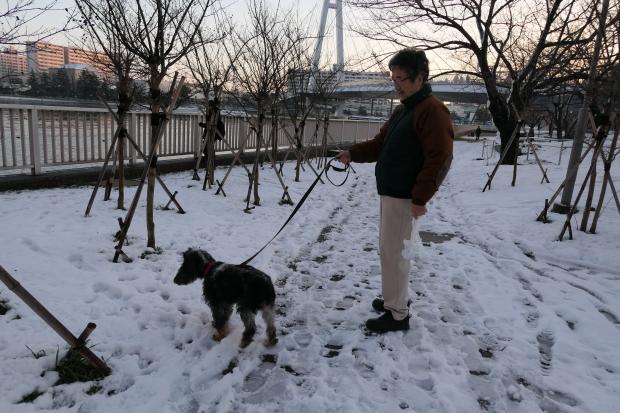 都会の雪、、猫は袋が好き。_d0193569_07060767.jpg