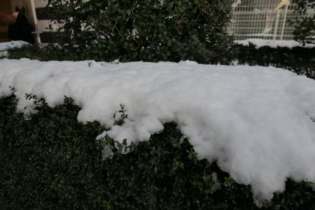 都会の雪、、猫は袋が好き。_d0193569_07062286.jpg