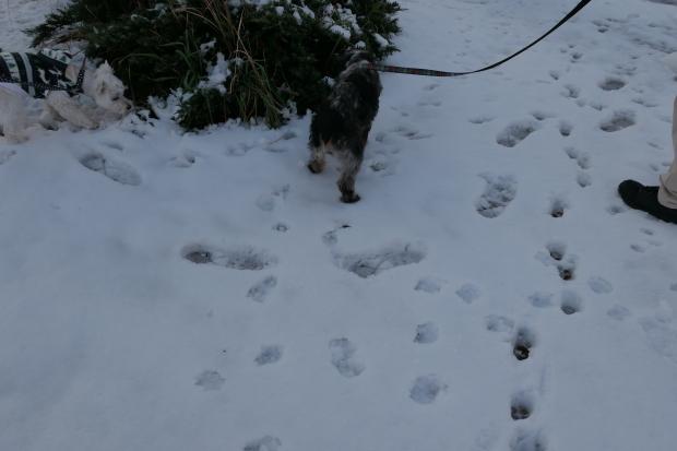 都会の雪、、猫は袋が好き。_d0193569_07065058.jpg