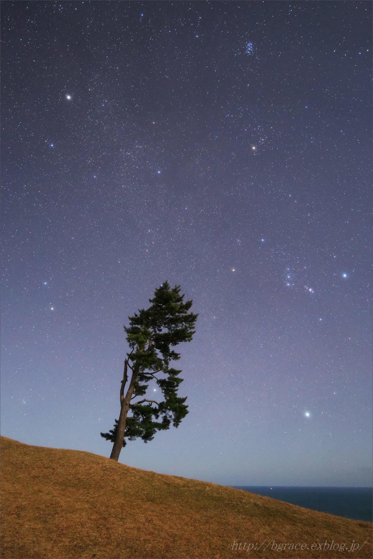 月夜に輝く 冬のダイヤモンド_b0191074_21035491.jpg