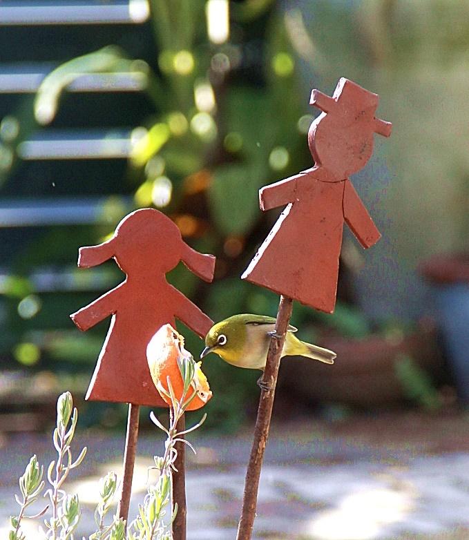 ◆小さな庭のお客さま_e0154682_00062878.jpg