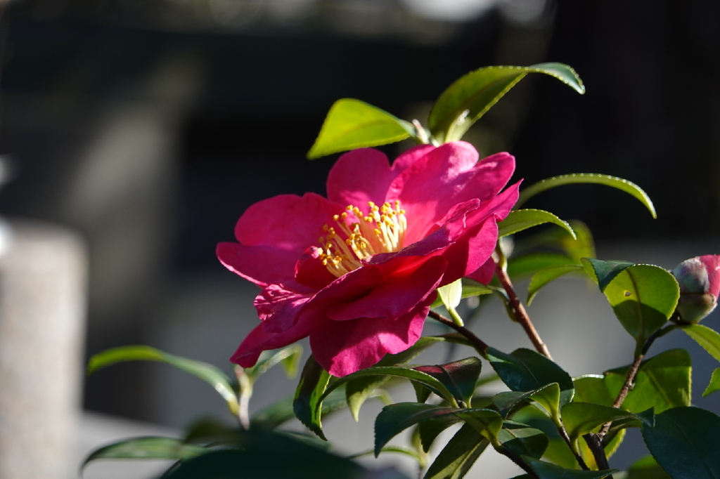 暖かな日差し_b0195589_20122736.jpg