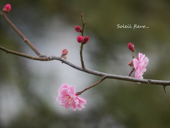 花がくれる、あたたかな時間を・・・_c0098807_18464814.jpg