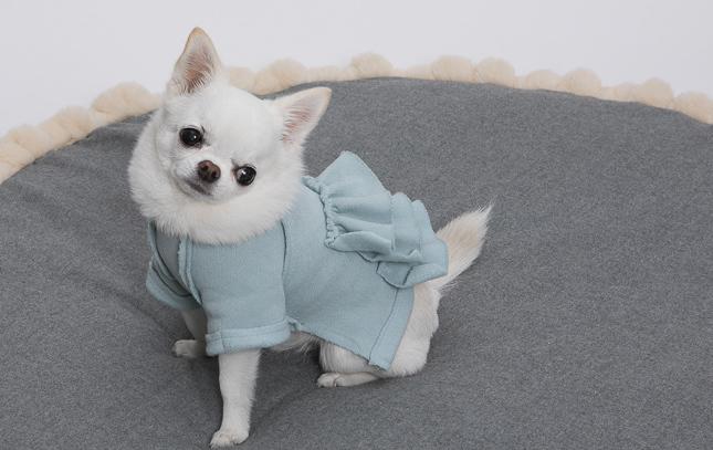 ☆ Louis dog ☆_d0060413_10290928.jpg