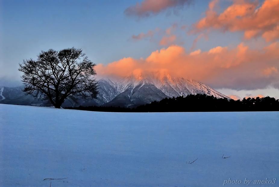 みちのく冬の一本桜_d0067934_18011529.jpg