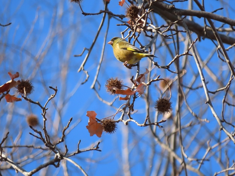 色鳥のこゑ先立てて来たりけり   鷹羽狩行_b0018682_22432386.jpg