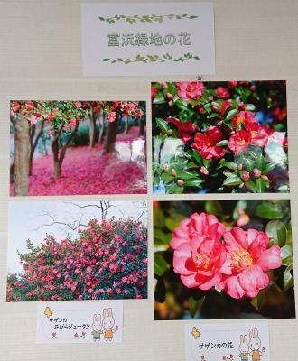 富浜緑地 花だよりの展示について_d0338682_13243459.jpg