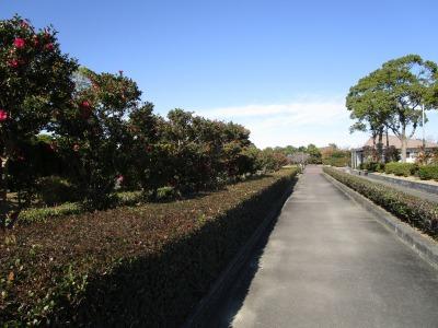 富浜緑地 花だよりの展示について_d0338682_13321313.jpg