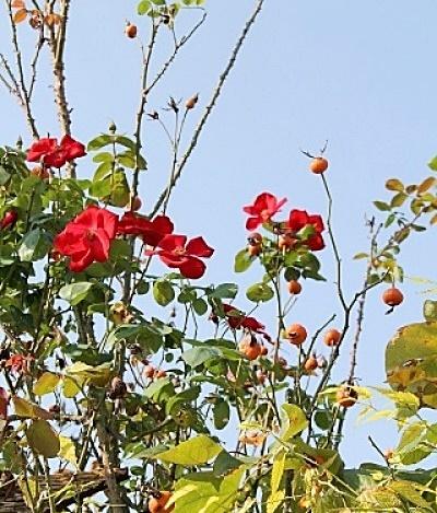 ◆まだ咲いています_e0154682_23540945.jpg