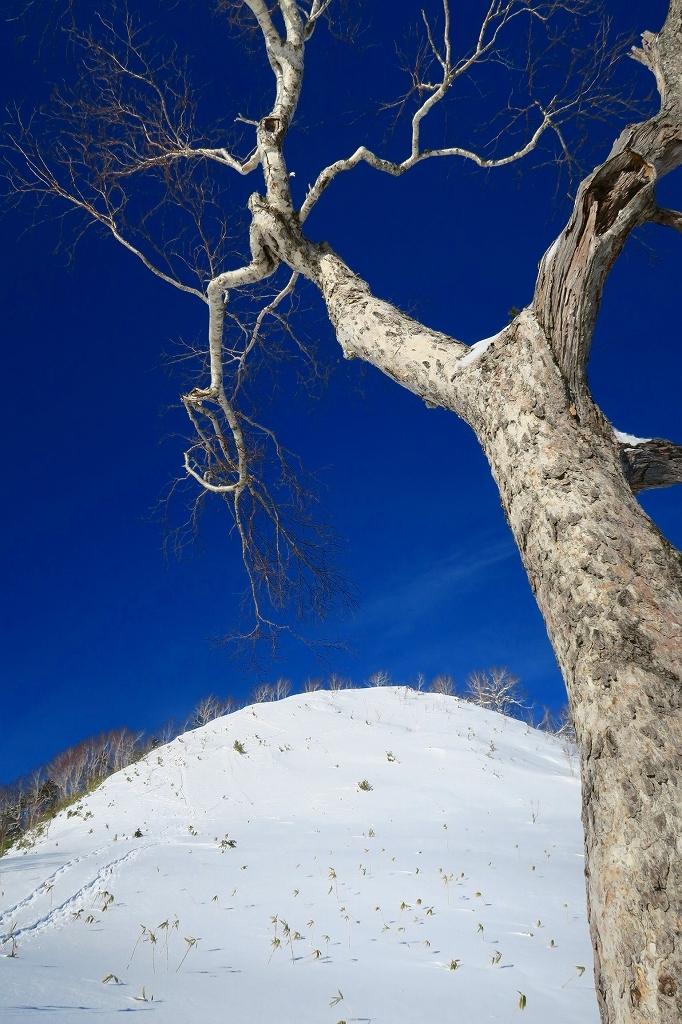 視界がすこぶる良かったオコタンペ山、2020.1.9_f0138096_20543021.jpg