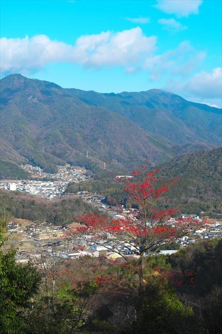 三本木山界隈タマミズキ(2020/01/09)_b0393210_16093743.jpg