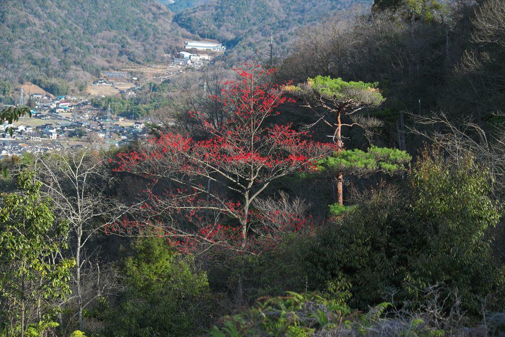 三本木山界隈タマミズキ(2020/01/09)_b0393210_16094246.jpg