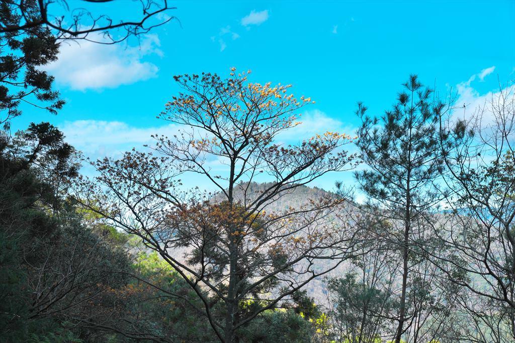 三本木山界隈タマミズキ(2020/01/09)_b0393210_16094594.jpg
