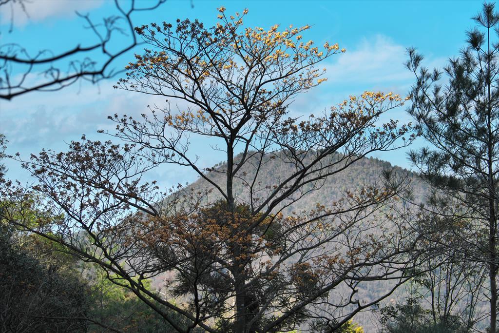 三本木山界隈タマミズキ(2020/01/09)_b0393210_16094902.jpg