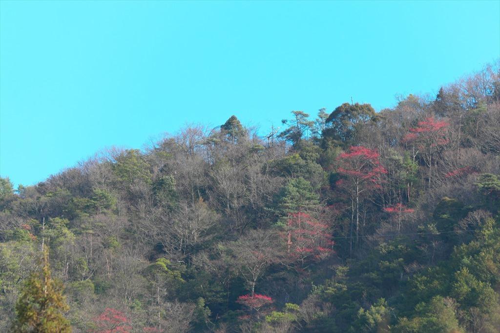 三本木山界隈タマミズキ(2020/01/09)_b0393210_16095675.jpg
