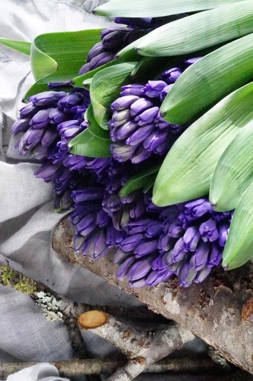 こいつぁ~春から♪_b0151911_11080401.jpg