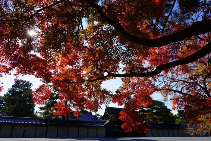 京都御所_e0177413_14355485.jpg