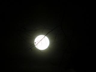 お月様_e0030924_10264246.jpg