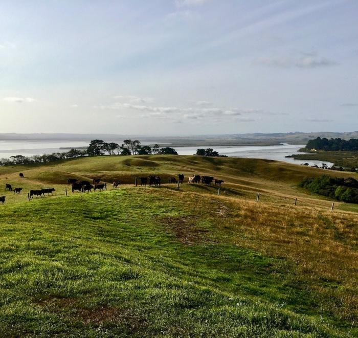 ようやく夏らしくなってきました/ Finally Getting Warmer In New Zealand_e0310424_08563808.jpg