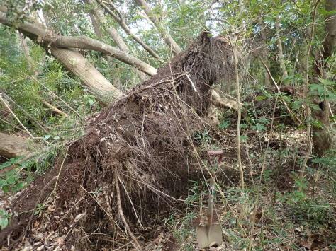 台風の総括_a0157159_21175028.jpg