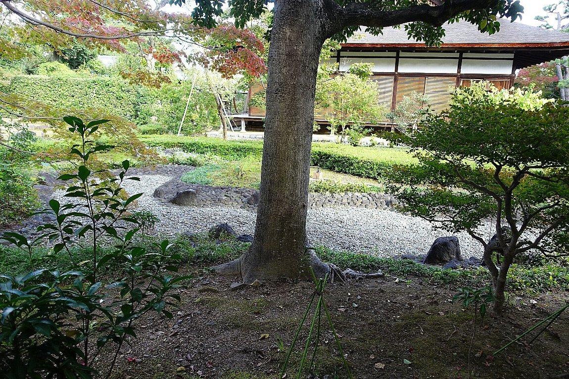 普門寺 方丈西庭「心字の庭」_c0112559_10075732.jpg