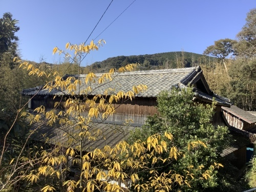 日本晴れとアオモジ_d0336460_02235337.jpeg